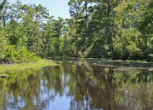 swamp-land-2-1392024-m